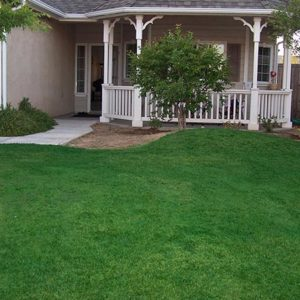 Lawn dry, yellowed, damaged, repaired, color, paint